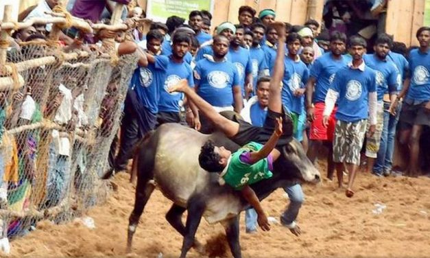 Jallikattu Protests and Preserving Tamil Culture
